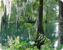 Withlacoochee River Florida, Withlacoochee River, The Withlacoochee River, Florida Rivers